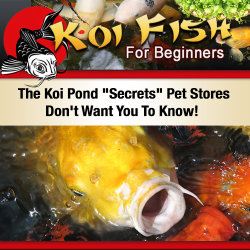 Koi Fist For Beginners