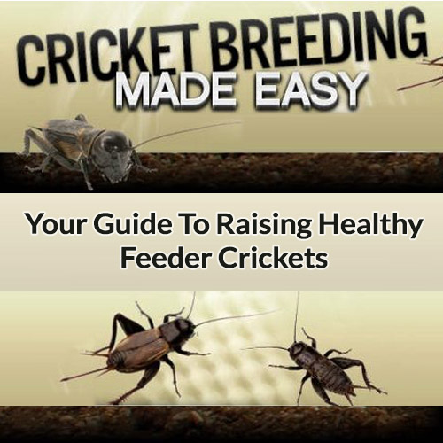 Cricket Breeding - Your Guide To Raising Healthy Feeder Crickets